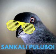 cropped-sankari.jpg